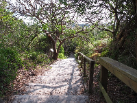 The trail through jungle down to the shore.