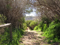 Hiking trail to the dunes with Barrenjoey Lighthouse in the distance.