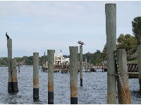 Birds love pilings.