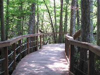 Raised wooden walkway through the forest.