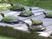 Turtles with little leaves on them.