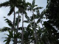 Tropical trees.
