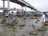 The rock pools keep kids busy for hours!