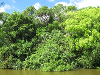 Mountain of jungly trees, across the water from turtle island.