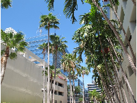 Palm trees and high-rises go well together!