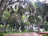 Incredible Spanish moss-draped oaks.