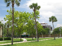 Palm trees and blue sky at the Daytona Beach campus.