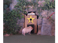 The pig in Animal Actors On Location show!