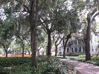 Walkway under Spanish moss.