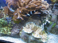 Coral and tropical fish in marine science lab.