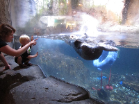 Mother and toddler son check out the otter!