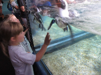 A girl enjoys seeing a penguin up close.