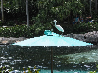 Egret walking on an umbrella.