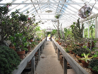 The Stove House, a collection of cacti in a greenhouse.