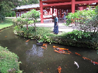 A tourist checks out the koi in the pond.