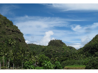 View of Waimea Valley from the road.