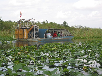The covered airboat heading through the water lilies.