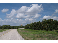 Driving through the orange orchards to get to the gardens.