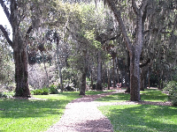 Pathway through moss-draped oaks.