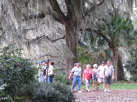 Visitors enjoy a walk under the exquisite oak trees.