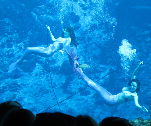 Weeki Wachee Mermaids (1.5 hrs west of Orlando), Orlando FL