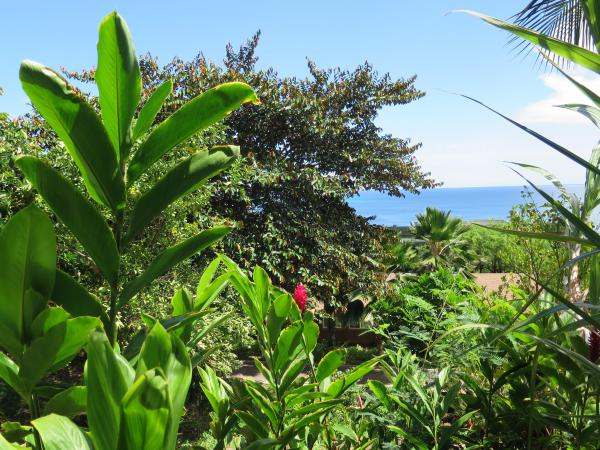 Bettini Gardens, Makaha, Oahu Hawaii