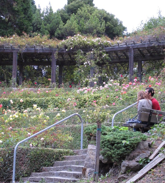 Berkeley Rose Garden, San Francisco California