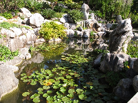 Lilypads and interesting rocks.