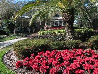 Mansion and poinsettia on a December morning in Winter Park.