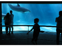 A couple watches the dolphins from below the water.