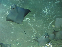 The amazingly cute sting ray faces!