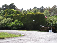 A giant whale topiary greets you as you walk toward Glenhaven Garden.