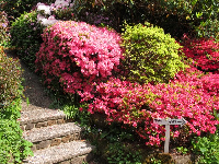 Stone steps and flowers of many shades of pink.