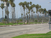 Cabrillo Blvd and its fantastic palms!