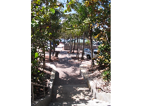 Pathway surrounded by tropical foliage.
