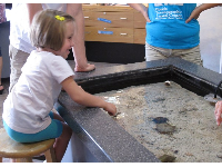 A girl delights in the touch tank.