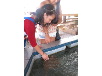 A young woman touches a sting ray.