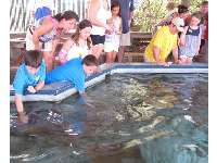 Kids stop to feed and touch the sting rays after the docent's talk.