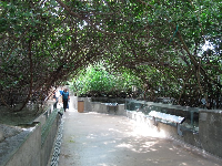 The mangrove tunnel- I love this part of the aquarium!