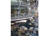 The California tide pools with purple sea urchins, beside the 4-story rainforest conservatory.