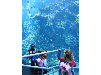 Kids enjoy the large reef tank.