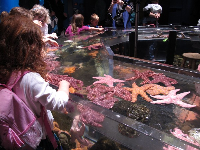 A school group checks out the touch tank.