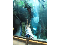 A girl stretches toward a huge fish in the rainforest tank.