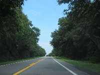 Country roads with tall trees leading into Tallahassee.