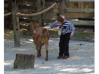 Petting zoo at the plantation.