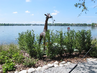 Giraffe sculpture beside the water.