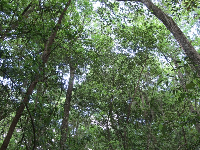 Looking up at the trees way above.