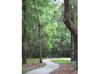 Winding path and trees of many shades.