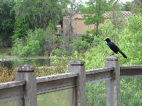 Bird at the boardwalk between Dinky Dock Park and Cornell Fine Arts Museum, Rollins College.