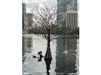 Gorgeous barren cypress tree in Lake Eola.